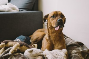 dog in bed with toys